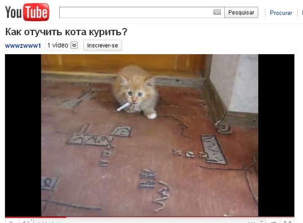Vídeo de gatinho 'fumante' faz sucesso na internet