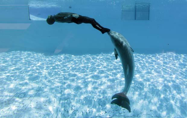 Escoltado por golfinhos, italiano bate recorde de mergulho em apneia