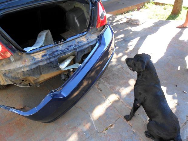 Cão farejador Cyborg ajudou a Força Nacional a prender mãe e filho com 49 kg de maconha em MS (Foto: Divulgação/Força Nacional)