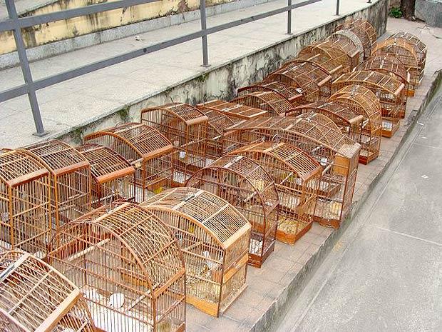 Pássaros foram apreendidos em feira libre, em Campo Grande (Foto: Divulgação / Polícia Militar)