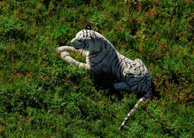Autoridades temiam que fosse um animal selvagem. (Foto: Hampshire Constabulary/AP)