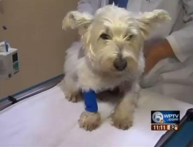 Dono luta com jacaré para salvar cão de estimação nos EUA