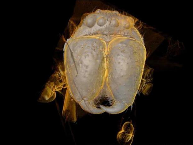 Aranha 3D 1 (Foto: Cortesia Andrew McNeil / Universidade de Manchester)