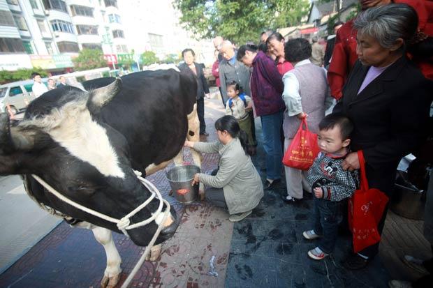 Fazendeira ordenha uma de suas vacas em uma rua na China. (Foto: China Daily/Reuters)