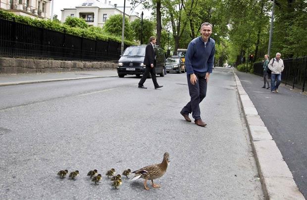 Primeiro-ministro da Noruega, Jens Stoltenberg, observa a pata e seus filhotes atravessando a rua. (Foto: Adrian Nottestad/Prime Ministers Office/Reuters)