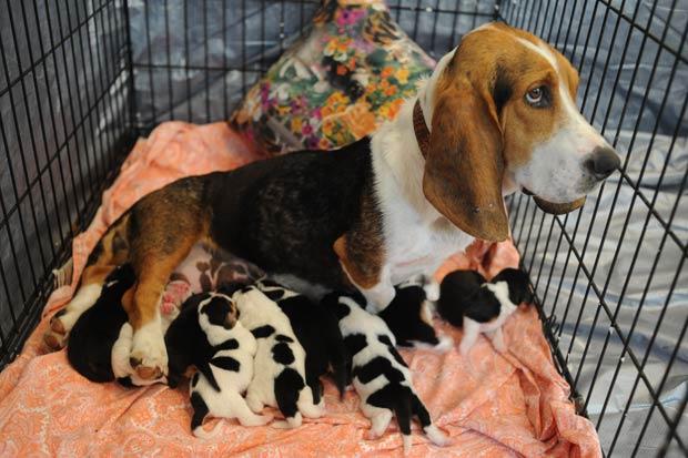 Cadela chamada 'Bonnie' deu à luz nove filhotes. (Foto: Paul Efird/Knoxville News Sentinel/AP)