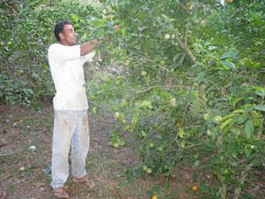 Pequeno produtor em Maricá, José Milton reclama a falta de incentivo (Foto: Aluizio Freire)