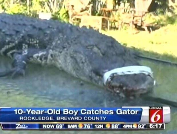 Aligátor fisgado pelo garoto Michael Dashe, de 10 anos. (Foto: Reprodução)