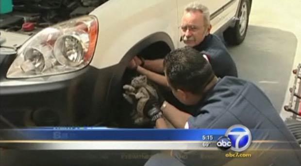 Gato estava preso no para-choque, perto da bateria do veículo. (Foto: Reprodução)
