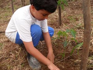 Aluno do Colégio Estadual David Capistrano planta uma árvore na escola. (Foto: Divulgação)
