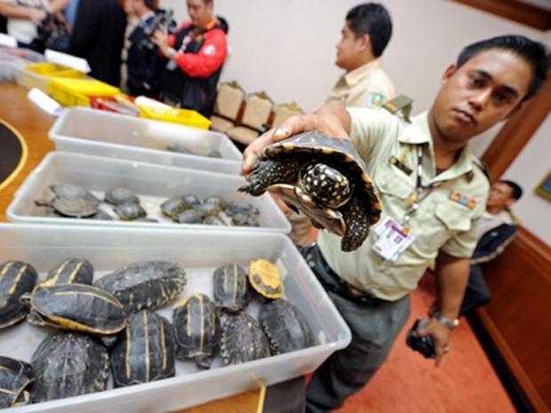 Tartaruga (Foto: Pornchai Kittiwongsakul/AFP)
