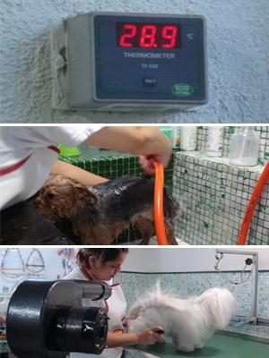 Sala de banho e tosa de pet shop tem ambiente quentinho para que os animais não passem frio. (Foto: Adriana Justi / G1)