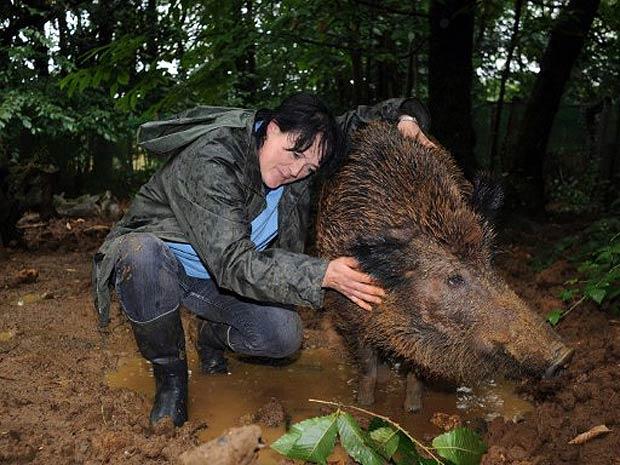 Evelyne Cornu posa para foto com sua porca selvagem, 'Mimine' (Foto: AFP)