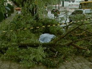 Idoso morre ao ser atingido por galho de árvore, em Curitiba. (Foto: Reprodução/RPC TV)