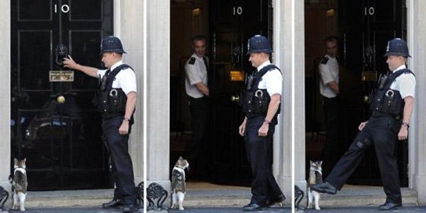 Larry, gato oficial de Downing Street, é 'convencido' a entrar na residência oficial do premiê britânico, nesta quinta-feira (9). O incidente ocorreu antes de encontro do primeiro-ministro David Cameron com o presidente da BMW, Norbert Reithofer (Foto: AFP)