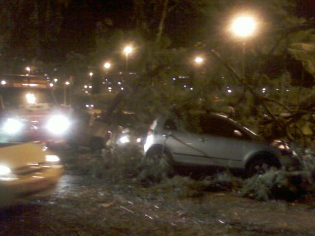 Árvore também atingiu outros carros na Lagoa (Foto: Fábio Soler / Arquivo pessoal)