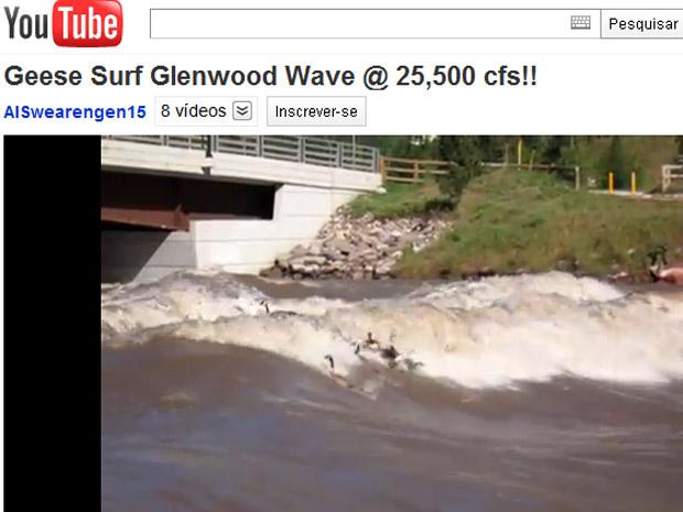 Gansos surfam no Rio Colorado (Foto: Reprodução de vídeo)