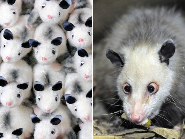 Versões em pelúcia da gambá vesga 'Heidi', que aparece à direita após chegar em seu novo lar no zoológico de Leipzig na semana passada (Foto: AP)