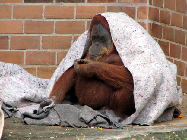 Macacos Zoo (Foto: Esther Nazareth/Divulgação)