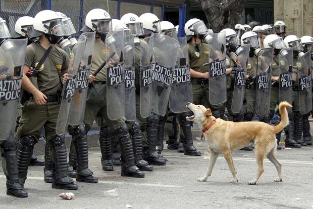 'Loukanikos' late sozinho em frente a uma barreira de policiais na Praça Syntagma, em Atenas, nesta quarta (15) (Foto: Reuters)