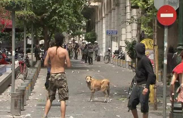 [ Matéria ] Vídeo reúne melhores momentos de cão anarquista da Grécia 1_____