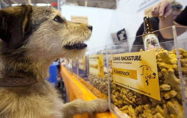 Cão observa vitrine da padaria, que produz mais de 20 tipos de biscoitos caninos (Foto: Frank Rumpenhorst / AFP)