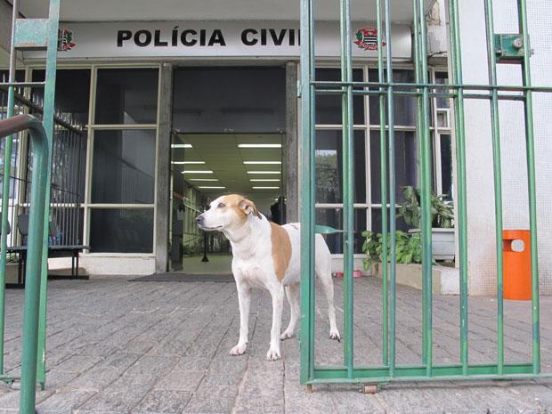 Cachorra Farinha, que vive no Denarc, na região central de SP (Foto: Luciana Bonadio/G1)