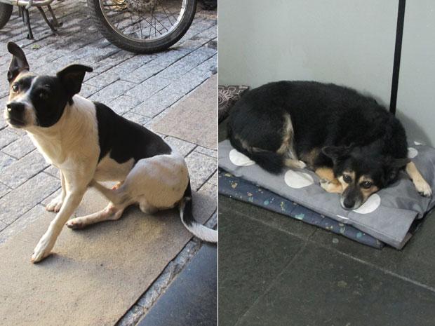 Cães que moram em distrito policial de Santo André (Foto: Marcelo Mora/G1)