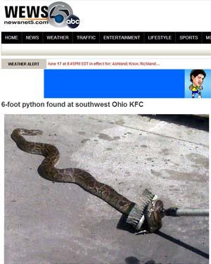 Site de afiliada do canal ABC exibe imagem da captura da cobra (Foto: Reprodução)