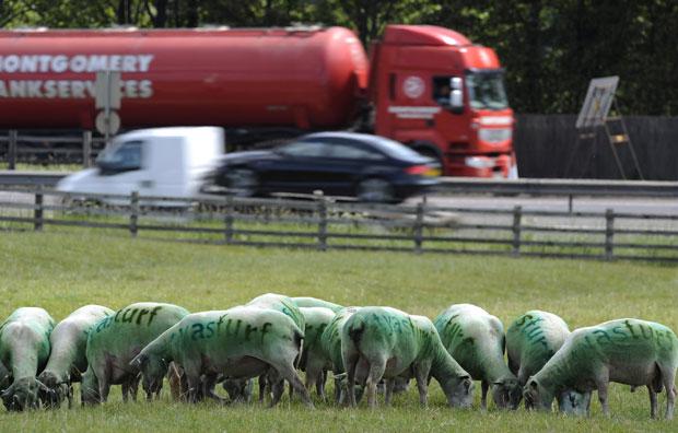 Da estrada, motoristas conseguem ver os animais pintados (Foto: Reuters)