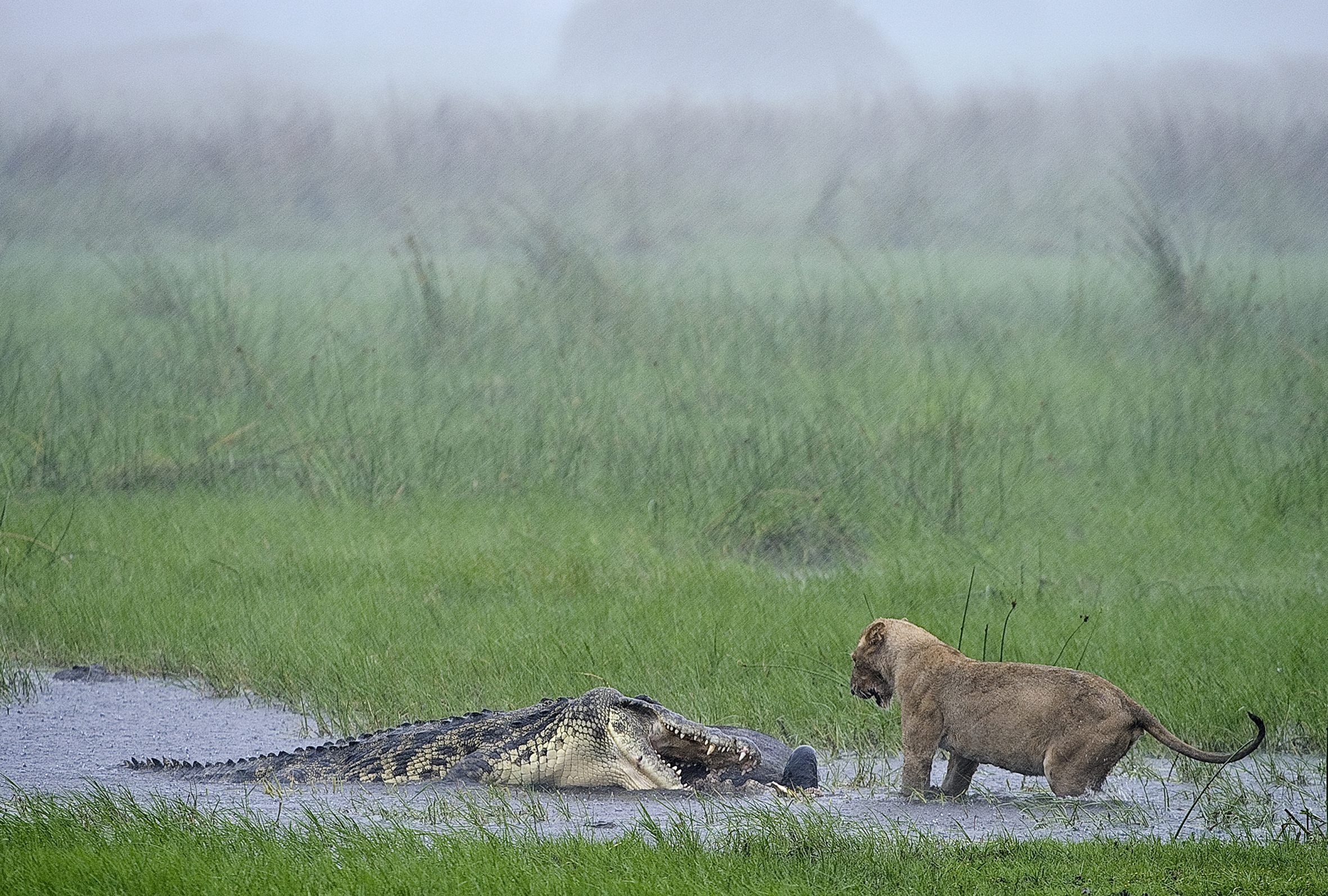 Foto realizada no Delta do Okavango, na África, por Sergey Gorshkov (Foto: Sergey Gorshkov/BBC)
