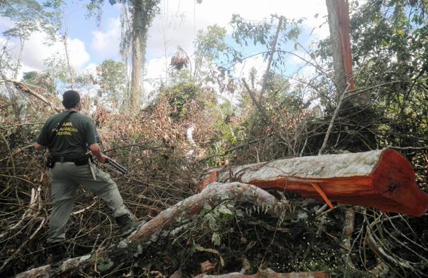 Desmatamento de 12 km² foi aberto rapidamente. (Foto: Divulgação/Ibama)