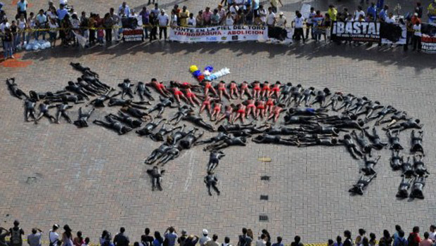 Ativistas formam um touro gigante nesta quinta-feira (30) durante protesto contra as touradas na cidade colombiana de Cali (Foto: AFP)