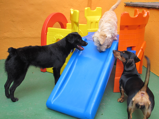 Cães aprendem a brincar com outros animais e a dividir as atenções das pessoas (Foto: Clara Velasco/G1)