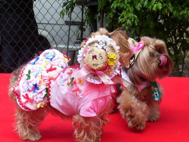 """Cães participaram de brincadeiras e de um concurso de moda  """"pet caipira"""" (Foto: Divulgação / Divulgação)"""