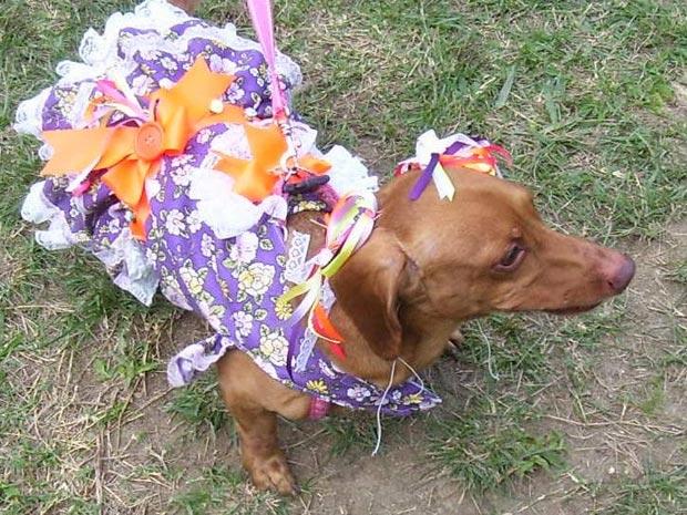 Cães se fantasiaram para festa julina na Lagoa Rodrigo de  Freitas (Foto: Divulgação / Divulgação)