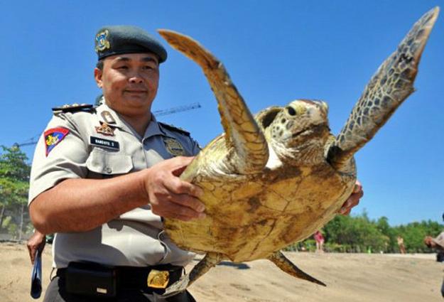 Policiais encontraram 18 animais da espécie dentro de barco em uma região de migração da tartaruga-verde, entre os Oceanos Pacífico e Índico. (Foto: Sonny Tumbelaka/AFP)