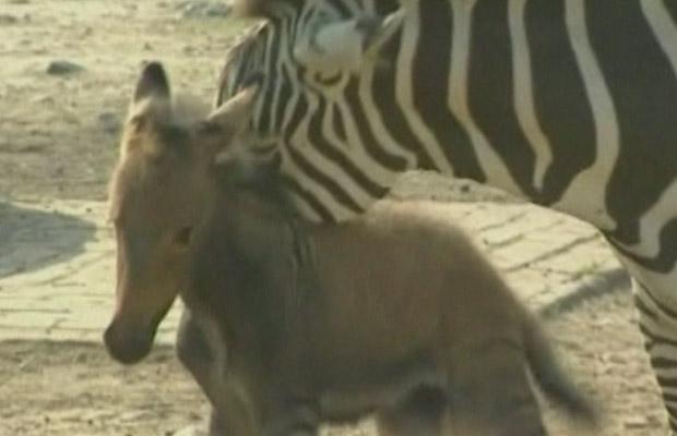 A mãe e o filhote (Foto: BBC)