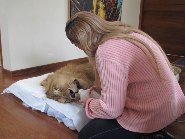 Veterinária dá mamadeira para Ariel (Foto: Caroline Hasselmann/G1)