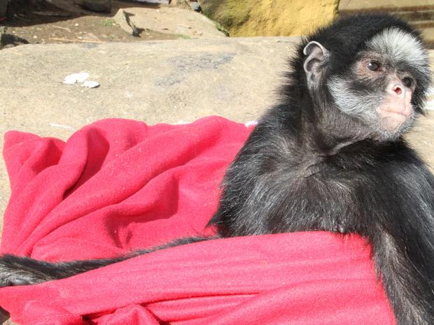 Macaco no zoologico de Gramado (Foto: Agência RBS)