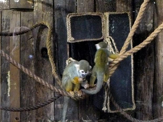 Micos no zoologico de Gramado (Foto: Caroline Zanchi/Divulgação)