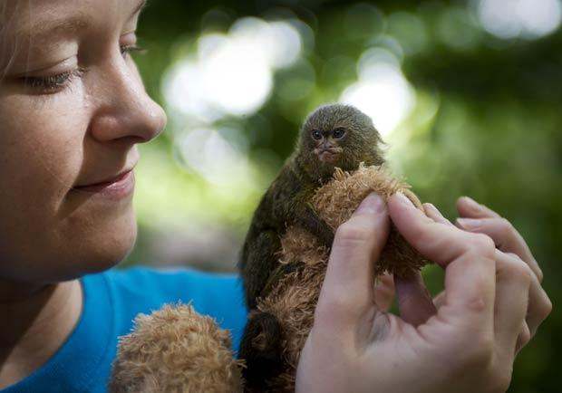 'Reillo' foi abandonado pelos pais e foi cuidado por Sarah Jurgen. (Foto: Jacob Hannah/Barcroft USA/Getty Images)