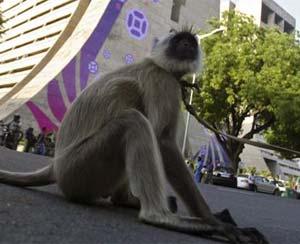 Macacos se casaram em cerimônia na Índia. (Foto: Imagem ilustrativa)