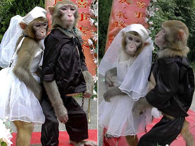 Macacos chamados Wukong e Xiaoya (fêmea) se casaram em uma cerimônia realizada em setembro de 2008 no zoo de Wenling, na China. (Foto: Reuters)