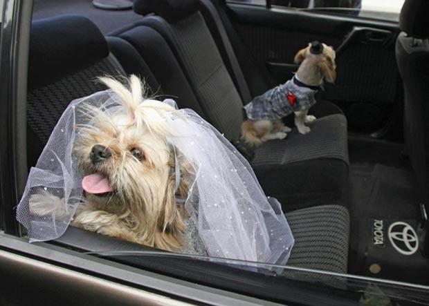 A cadela Dana (à frente) e o cachorro Puki (ao fundo no banco do carro) fizeram um casamento simbólico em outubro de 2007 em Lima, no Peru. (Foto: Pilar Olivares/Reuters)
