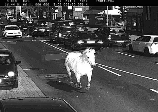 Cavalo foi flagrado correndo ao longo de uma rua na cidade de Meppen. (Foto: Reprodução)