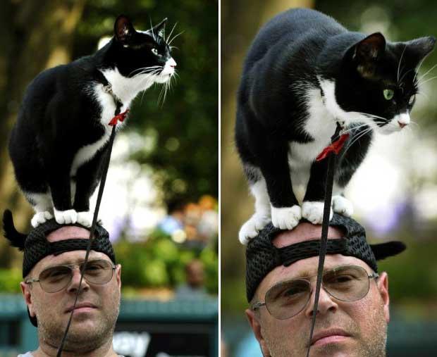 Homem é flagrado tomando sol com seu gato de estimação se equilibrando na cabeça em Union Square Park, em Nova York, nesta segunda-feira (11). Ele é figura recorrente na cidade, e uma de suas aparições recentes ocorreu em maio (Foto: AFP)
