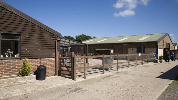 O asilo para animais idosos (Foto: Tindledown Farm)