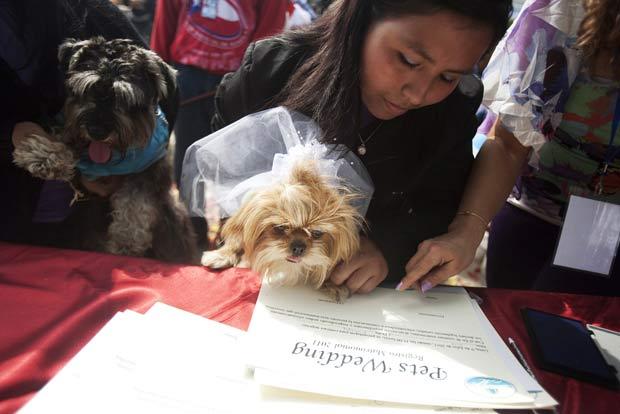 Casal de cães durante a cerimônia simbólica em Lima. (Foto: Enrique Castro-Mendivil/Reuters)