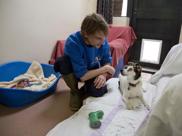 Cão é cuidado no asilo (Foto: Tindledown Farm)